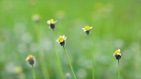Χλόη λουλουδιών κίτρινη τα χτυπήματα αέρα από τον αέρα Φύση σκιερή στον πράσινο χορτοτάπητα απόθεμα βίντεο