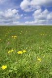 χλόη λουλουδιών πεδίων π&i στοκ φωτογραφίες με δικαίωμα ελεύθερης χρήσης