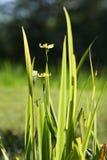 χλόη λουλουδιών Στοκ φωτογραφίες με δικαίωμα ελεύθερης χρήσης