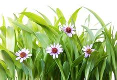 χλόη λουλουδιών