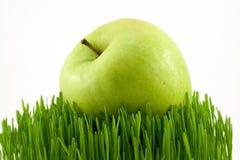 χλόη μήλων πράσινη Στοκ Εικόνα