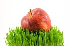 χλόη μήλων Στοκ Εικόνα