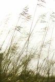 χλόη μακριά Στοκ φωτογραφία με δικαίωμα ελεύθερης χρήσης