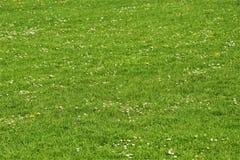 Χλόη με τις καλόγριες και τις μαργαρίτες Στοκ φωτογραφία με δικαίωμα ελεύθερης χρήσης