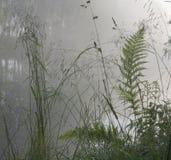 χλόη ομίχλης φτερών Στοκ φωτογραφία με δικαίωμα ελεύθερης χρήσης