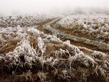 χλόη παγετού Στοκ Φωτογραφίες