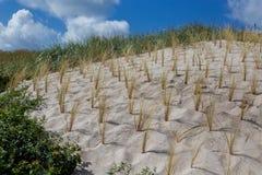 Χλόη παραλιών και αμμόλοφων Στοκ Εικόνες