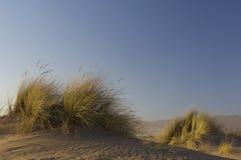 Χλόη παραλιών που φυσά στον αέρα στην κυματισμένη άμμο στοκ εικόνες