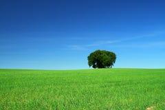 χλόη πεδίων πράσινη Στοκ φωτογραφίες με δικαίωμα ελεύθερης χρήσης