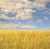 χλόη πεδίων Στοκ φωτογραφία με δικαίωμα ελεύθερης χρήσης