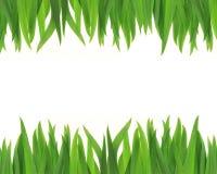 χλόη πλαισίων πράσινη Στοκ φωτογραφία με δικαίωμα ελεύθερης χρήσης