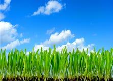 χλόη πλαισίων πράσινη Στοκ Φωτογραφίες