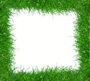 χλόη πλαισίων πράσινη Στοκ εικόνες με δικαίωμα ελεύθερης χρήσης