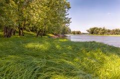 Χλόη ποταμών Στοκ φωτογραφία με δικαίωμα ελεύθερης χρήσης