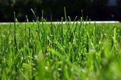 χλόη πράσινη Στοκ Φωτογραφίες