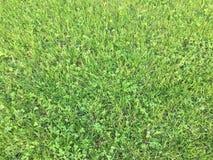 Χλόη Πράσινος η χλόη ανασκόπησης απομόνωσε το λευκό Φυσική πράσινη σύσταση χλόης, φυσικό πράσινο υπόβαθρο χλόης για το σχέδιο με  Στοκ φωτογραφία με δικαίωμα ελεύθερης χρήσης