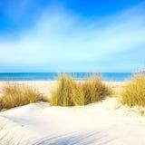 Χλόη σε μια άσπρους παραλία, έναν ωκεανό και έναν ουρανό αμμόλοφων άμμου Στοκ Εικόνα