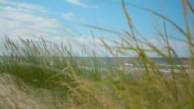 Χλόη στην κινηματογράφηση σε πρώτο πλάνο παραλιών με τη θάλασσα και σύννεφα στην εστίαση στο υπόβαθρο φιλμ μικρού μήκους