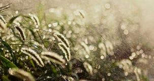 Χλόη στη βροχή αναδρομικά φωτισμένη φιλμ μικρού μήκους