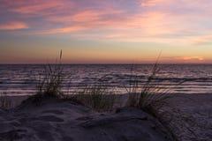 Χλόη στους αμμόλοφους άμμου στοκ εικόνα