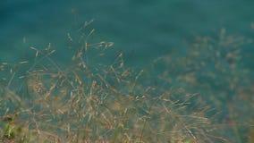 Χλόη στο λόφο με τη μουτζουρωμένη θάλασσα απόθεμα βίντεο