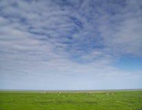 χλόη σύννεφων πράσινη στοκ εικόνες με δικαίωμα ελεύθερης χρήσης