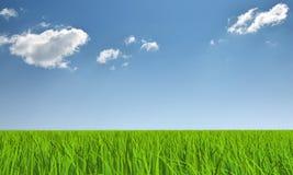 χλόη σύννεφων Στοκ Εικόνα