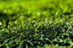 Χλόη τεχνητή χλόη Πλούσιο πράσινο χρώμα στοκ εικόνες με δικαίωμα ελεύθερης χρήσης