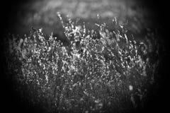 Χλόη τομέων, που φωτίζεται από τις ακτίνες του ήλιου φθινοπώρου ρύθμισης Στοκ φωτογραφία με δικαίωμα ελεύθερης χρήσης