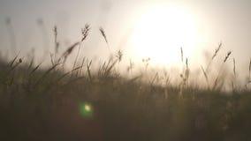 Χλόη τομέων στην κινηματογράφηση σε πρώτο πλάνο ηλιοβασιλέματος φιλμ μικρού μήκους