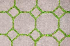 χλόη τσιμέντου τούβλου πράσινη Στοκ Φωτογραφία