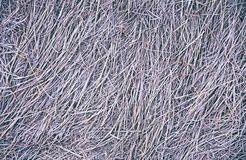 Χλόη φθινοπώρου που καλύπτεται με το hoarfrost ως υπόβαθρο στοκ φωτογραφίες με δικαίωμα ελεύθερης χρήσης