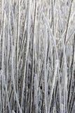 χλόη χιονώδης Στοκ Φωτογραφία