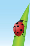 χλόη ladybug Στοκ εικόνες με δικαίωμα ελεύθερης χρήσης