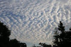 Χνουδωτά σύννεφα με τα δέντρα σκιαγραφιών στο πρώτο πλάνο στοκ εικόνες με δικαίωμα ελεύθερης χρήσης