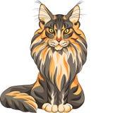 Χνουδωτή γάτα του Μαίην Coon Στοκ εικόνα με δικαίωμα ελεύθερης χρήσης