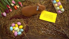 Χνουδωτή κουνελιών Πάσχας ευχετήρια κάρτα τοπ άποψης έννοιας συμβόλων εορτασμού παραδοσιακή μυρίζοντας απόθεμα βίντεο