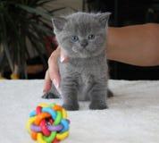 Χνουδωτή μαλακή μικρή γάτα Στοκ εικόνες με δικαίωμα ελεύθερης χρήσης