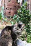 Χνουδωτή τιγρέ γάτα στον κήπο με το Βούδα στοκ εικόνες