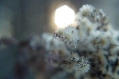 Χνουδωτός θάμνος με τα αγκάθια το χειμώνα στοκ φωτογραφίες με δικαίωμα ελεύθερης χρήσης