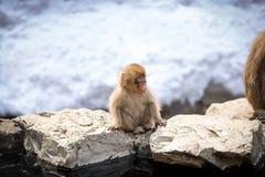 Χνουδωτός χαριτωμένος πίθηκος μωρών στοκ εικόνα