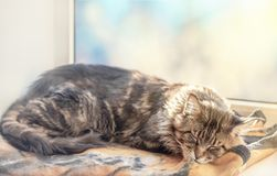 Χνουδωτός χαριτωμένος ύπνος γατών στοκ εικόνες
