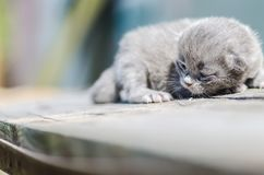 Χνουδωτό λίγο γατάκι είναι ακόμα πολύ βλέπει σε τίποτα meows το κοίταγμα στοκ φωτογραφίες με δικαίωμα ελεύθερης χρήσης