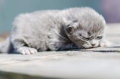 Χνουδωτό λίγο γατάκι είναι ακόμα πολύ βλέπει σε τίποτα meows το κοίταγμα στοκ εικόνα με δικαίωμα ελεύθερης χρήσης