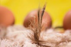 Χνουδωτό φτερό κοτόπουλου σε ένα υπόβαθρο των αυγών Στοκ φωτογραφία με δικαίωμα ελεύθερης χρήσης