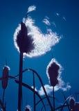 χνουδωτό φως Στοκ εικόνες με δικαίωμα ελεύθερης χρήσης