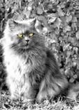 Χνουδωτή γάτα που κοιτάζει μακριά Στοκ φωτογραφία με δικαίωμα ελεύθερης χρήσης