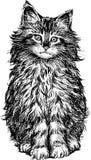 Χνουδωτή γάτα Στοκ φωτογραφία με δικαίωμα ελεύθερης χρήσης
