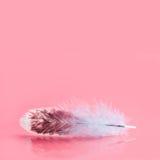 Χνουδωτό ζωηρόχρωμο φτερό στο ρόδινο υπόβαθρο Όμορφο χνουδωτό σχέδιο φτερώματος πουλιών Ρηχό βάθος του τομέα εκλεκτικό Στοκ Εικόνες