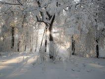 Χνουδωτό χιόνι Στοκ Εικόνες